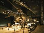 課題解決と空間づくり:北九州市立自然史・歴史博物館 いのちのたび博物館